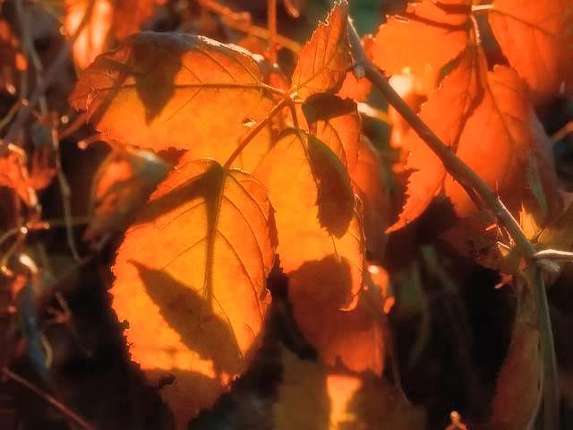 Listovi Leaves-3copy