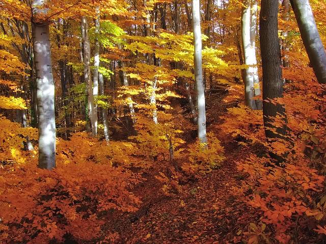 Stiže jesen Vrsani10640x480
