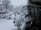 Pics of Snow Th_IMG_1120