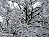 Pics of Snow Th_IMG_1122