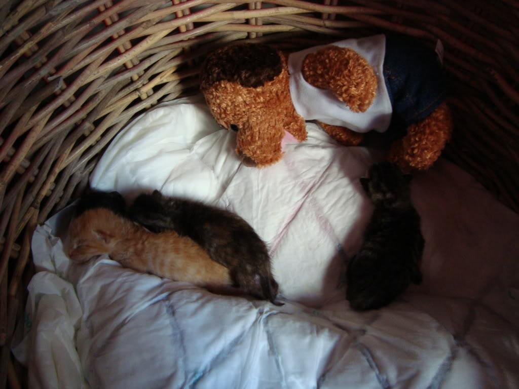 sos βρηκαμε 4 νεογεννητα γατακια - Σελίδα 2 DSC00340