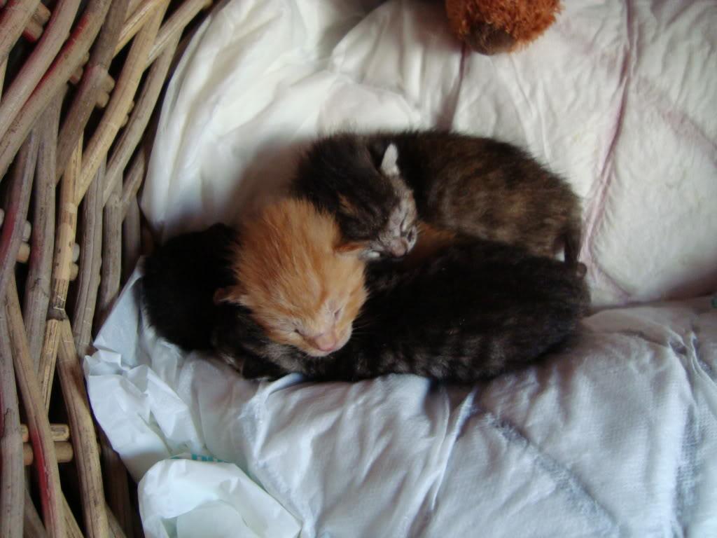 sos βρηκαμε 4 νεογεννητα γατακια - Σελίδα 2 DSC00343