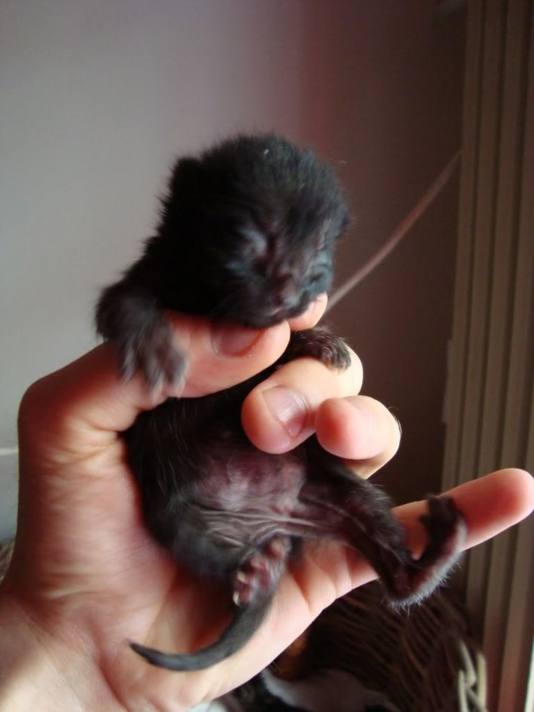 sos βρηκαμε 4 νεογεννητα γατακια - Σελίδα 2 DSC00344