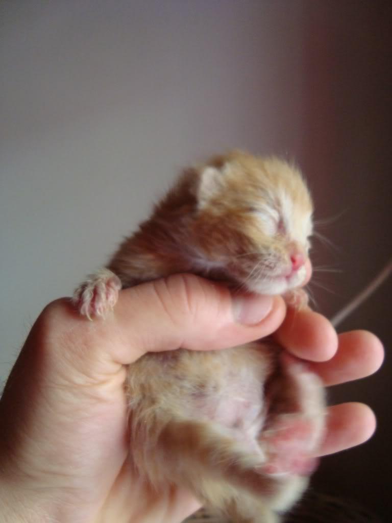 sos βρηκαμε 4 νεογεννητα γατακια - Σελίδα 2 DSC00350