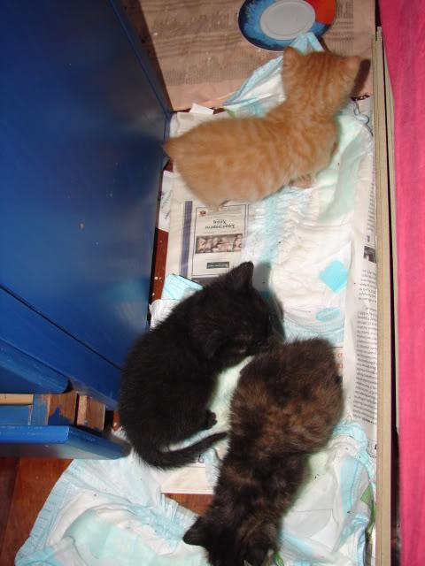 sos βρηκαμε 4 νεογεννητα γατακια - Σελίδα 14 DSC05030