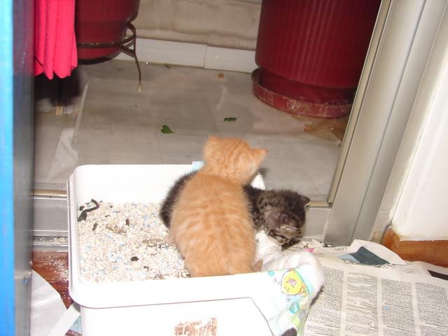 sos βρηκαμε 4 νεογεννητα γατακια - Σελίδα 14 DSC05032