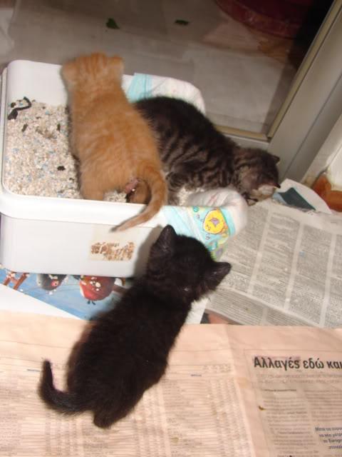 sos βρηκαμε 4 νεογεννητα γατακια - Σελίδα 14 DSC05033