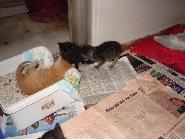 sos βρηκαμε 4 νεογεννητα γατακια - Σελίδα 14 DSC05035