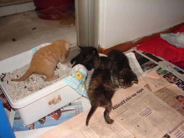 sos βρηκαμε 4 νεογεννητα γατακια - Σελίδα 14 DSC05036