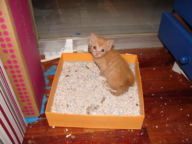 sos βρηκαμε 4 νεογεννητα γατακια - Σελίδα 14 DSC05037
