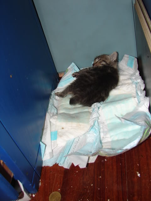sos βρηκαμε 4 νεογεννητα γατακια - Σελίδα 14 DSC05039