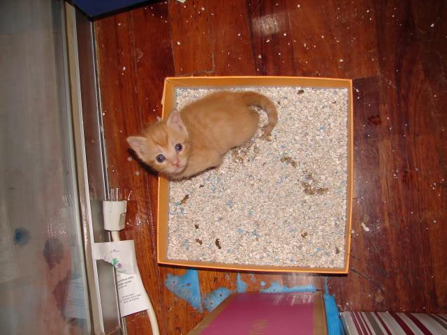 sos βρηκαμε 4 νεογεννητα γατακια - Σελίδα 14 DSC05042