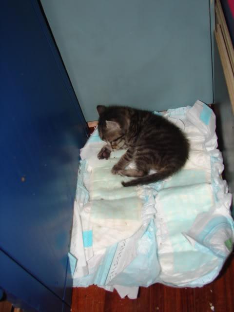 sos βρηκαμε 4 νεογεννητα γατακια - Σελίδα 14 DSC05043