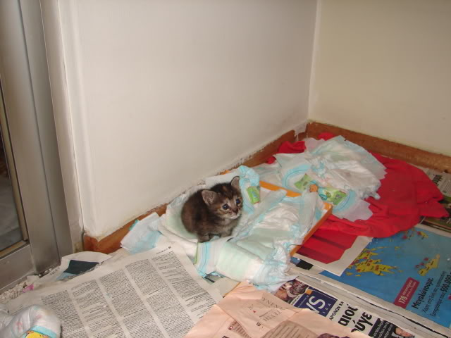 sos βρηκαμε 4 νεογεννητα γατακια - Σελίδα 14 DSC05044