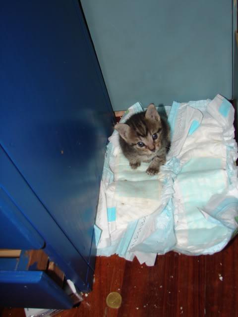 sos βρηκαμε 4 νεογεννητα γατακια - Σελίδα 14 DSC05045