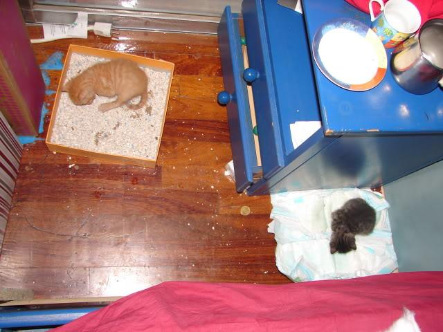 sos βρηκαμε 4 νεογεννητα γατακια - Σελίδα 14 DSC05046