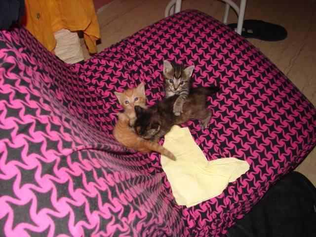 sos βρηκαμε 4 νεογεννητα γατακια - Σελίδα 14 DSC05053