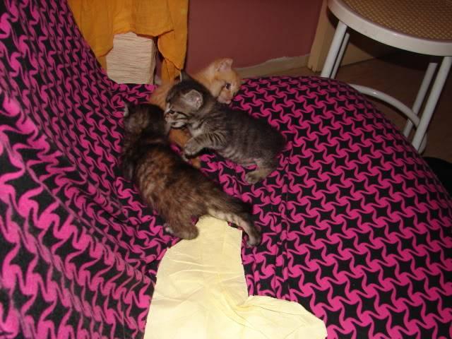 sos βρηκαμε 4 νεογεννητα γατακια - Σελίδα 14 DSC05054