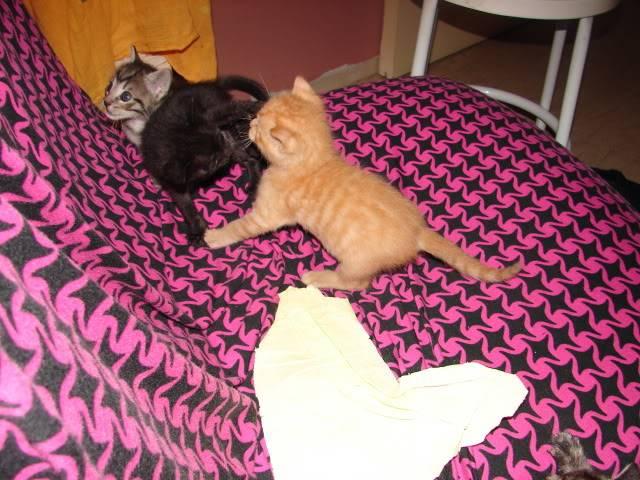 sos βρηκαμε 4 νεογεννητα γατακια - Σελίδα 14 DSC05057