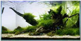 Aquascape Riverbank_planted_aquarium