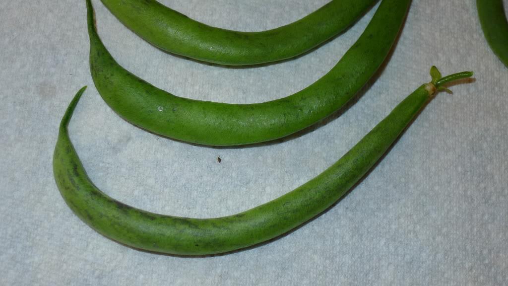 Need help identifying this bean P1040135