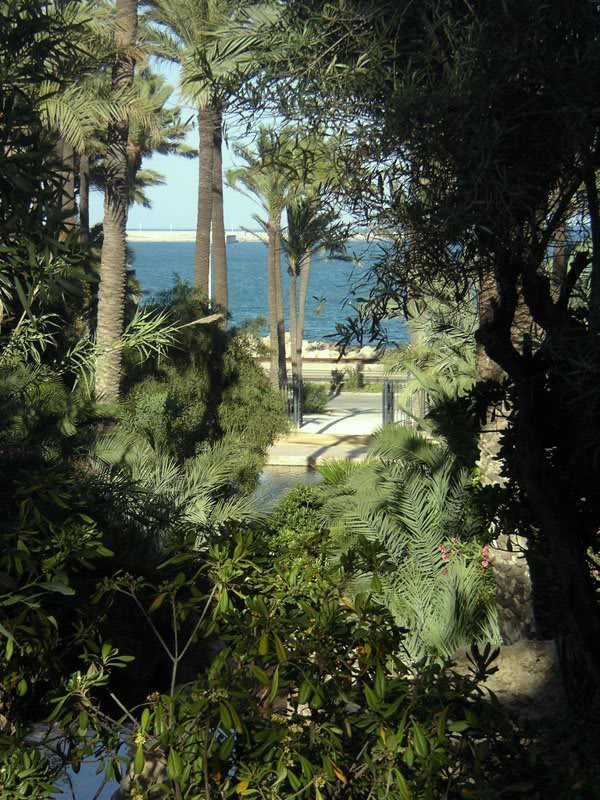Alicante. PalmeralAlicanteResak_14