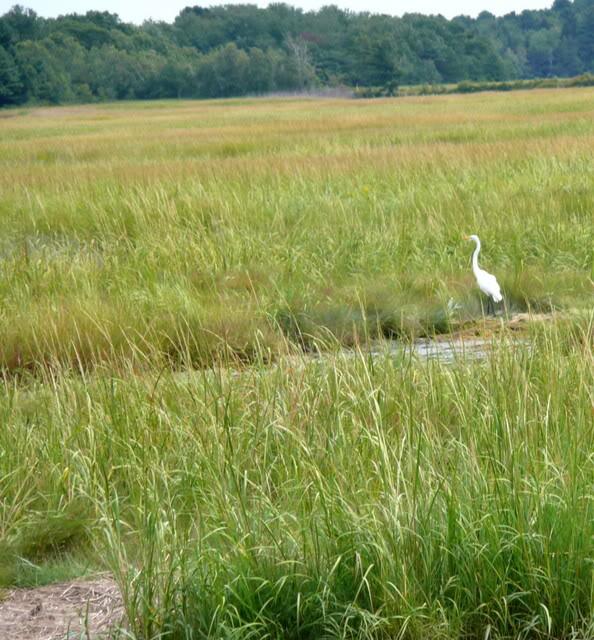 Le Maine...là où vit Stephen King. LeMaine2007051-2