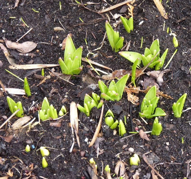Le printemps montre le bout de son nez... Avril2011101