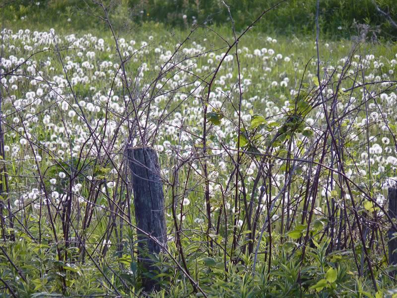 Le printemps montre le bout de son nez... Juin2011015
