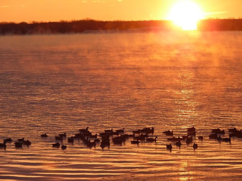 Lever du soleil chez moi ce matin à 5 h. 15.photo Octobrenovembredcembre12154