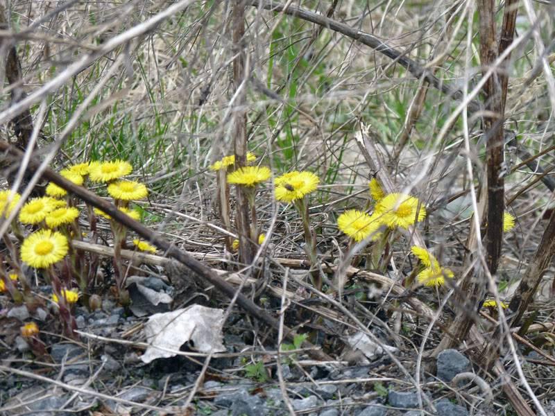 Le printemps montre le bout de son nez... Avril2011103