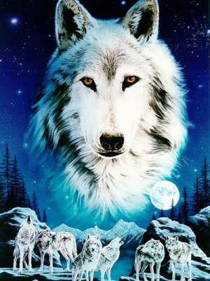 Celbration Wolves