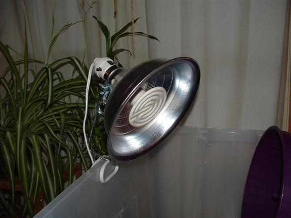 hibernation température lumière chauffante help. Ampoulechauffante