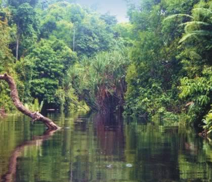 Berbak Parc National (Ile de Sumatra) Berbak