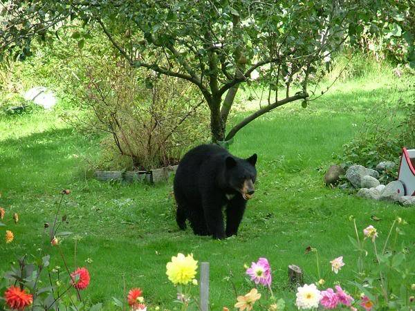 A bear photo bear.jpg