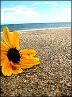 ggetu avatarid, UUED 19.08.09 Sunbathe_by_xxPaperflowersxx