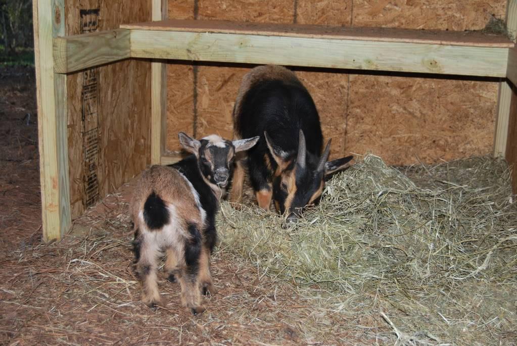 The Goaties! 20120305_6