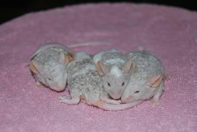 Cute Curlies! 20120502_20