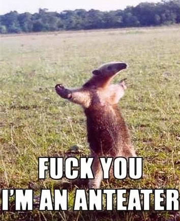 Photo Gallery of Absolute Randomness - Page 3 Anteater