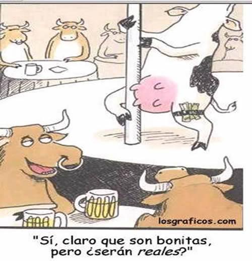 Humor gráfico Vaca