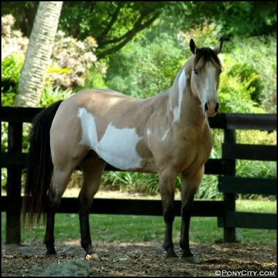 My Horse Characters.PoS QHbukskinovero