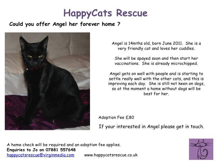 Angel - 14 Mth old female cat - Hampshire Angel