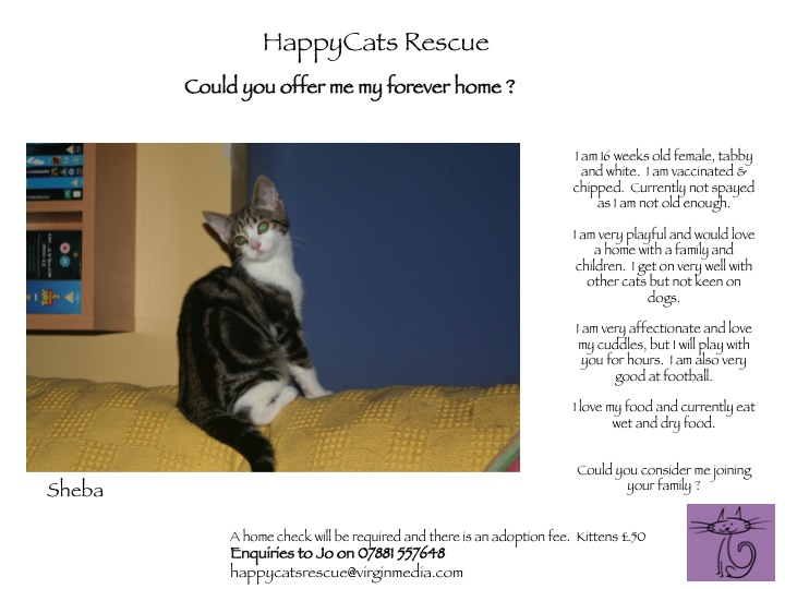 Sheba - HappyCats Rescue - 17 Wks Female Tabby & White DSH - Hampshire Slide1-1