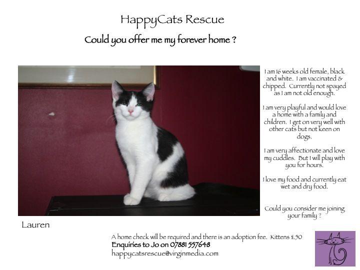 Lauren - HappyCats Rescue - 17 Wks Female Black & White DSH - Hampshire Slide1-2