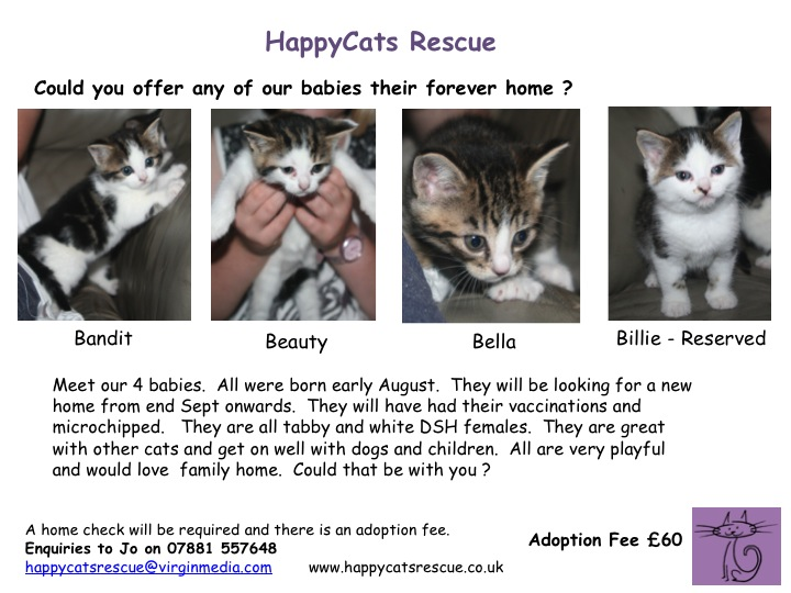 3 tabby & White Kittens - Currently 5 Weeks - DSH Females - Hampshire Slide1-4
