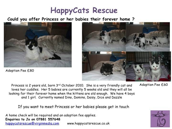 Princess & 5 Kittens looking for homes - Hampshire Slide1-5