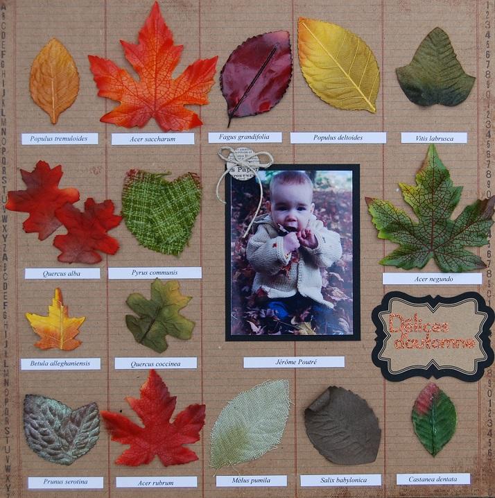 8 octobre 2013 - Délices d'automne (ma page herbier) Herbier_zpse6b6e560