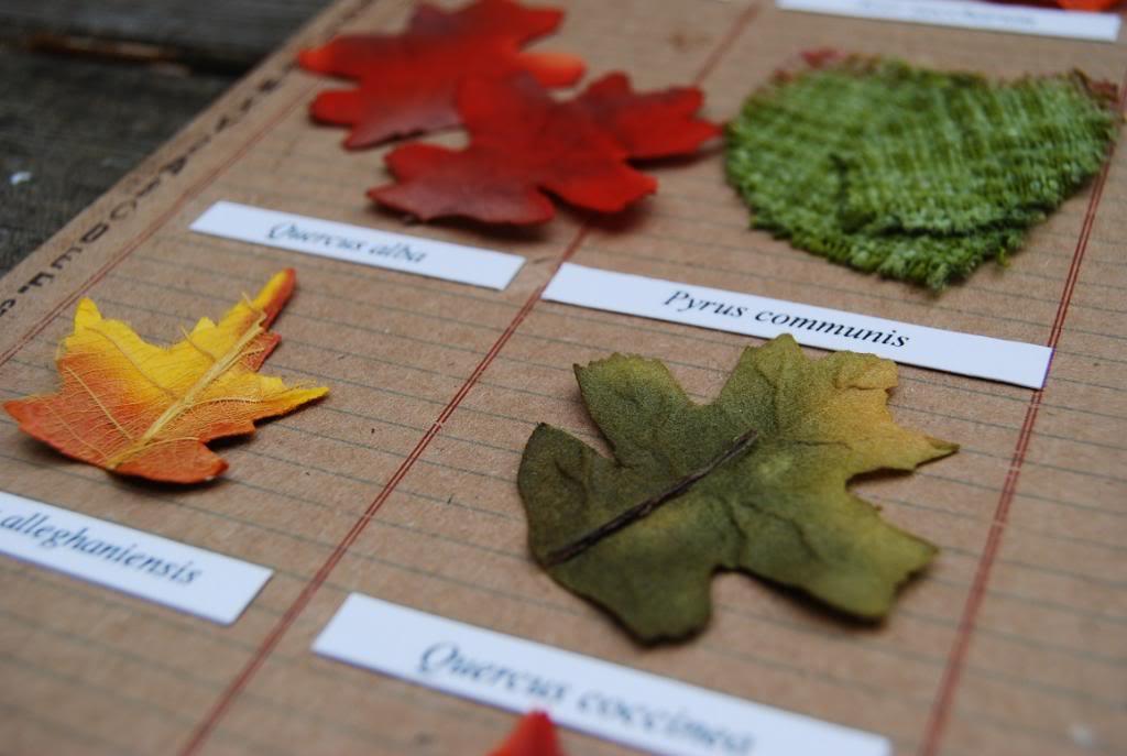 8 octobre 2013 - Délices d'automne (ma page herbier) Herbiergros-plan_zps851cf5ad