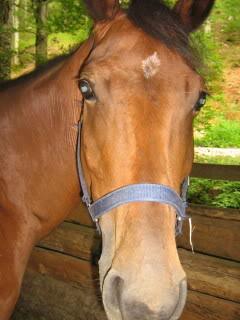 Ranch Bubač Konji_1148_1
