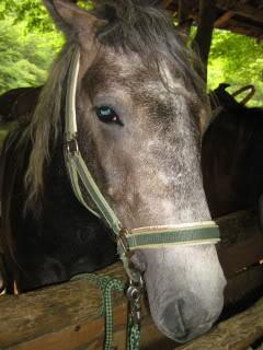 Ranch Bubač Konji_1159_1